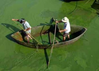 A invasão da alga verde