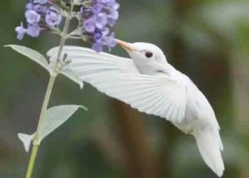 Albinismo: O branco que a natureza merece