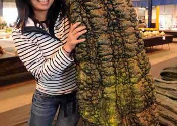 Exposição de vegetais gigantes