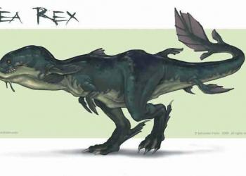 Aqua Rex – O concept