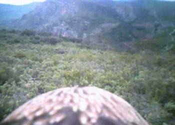 A visão da águia