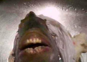 O bizarro peixe que tem dentes de gente