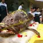 Peixão