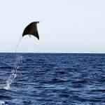 Arraias voadoras