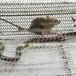 Já não se fazem mais cobras como antigamente