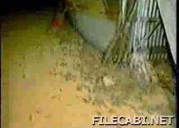 Medo de rato? Não veja este video!