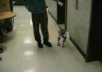 A evolução dos robôs que andam
