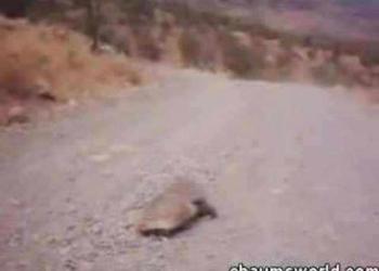 Tentativa de estupro gravada em video