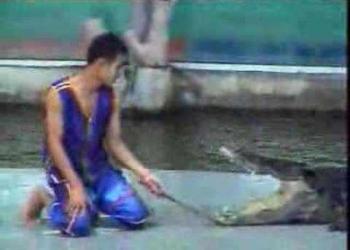 A vingança do Crocodilo e os Touros que não levam desaforo pra casa