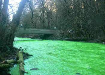 5 rios Gumps