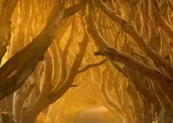 O incrível túnel de árvores da Irlanda