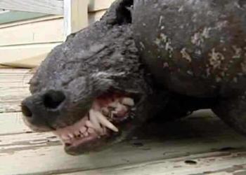 Top 5 criaturas estranhas mortas