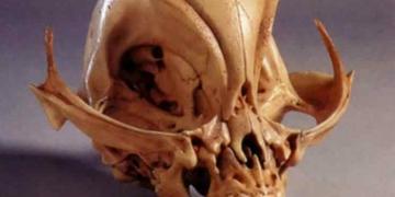 A navalha de Tsoukalos e o mistério dos crânios alongados peruanos