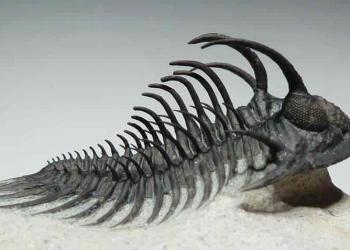 Ele viveu há 400 milhões de anos atrás!