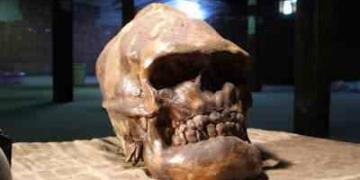Crânios bizarros – Encontrado o crânio do pé grande?