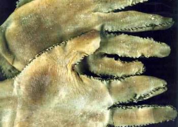 Luvas de mãos humanas