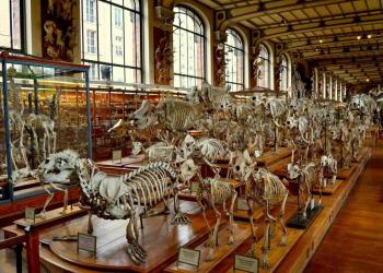 Em algum lugar no Museu de História Natural