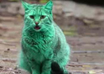 O bizarro gato verde da Bulgária