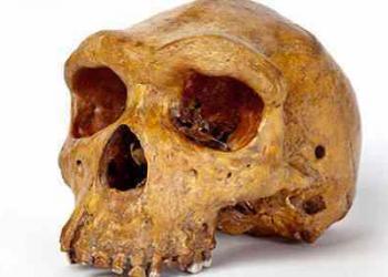O crânio e o estranho mistério de um assassinato