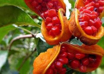 Frutas esquisitas