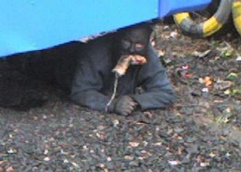 O bizarro homem comedor de ratos