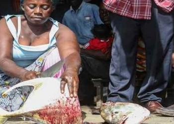 Foto Gump do dia: cenas de um mercado africano