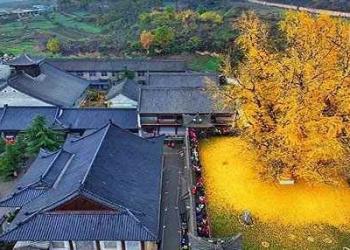 Foto Gump do dia: O esplendor da Árvore de Ouro, na China
