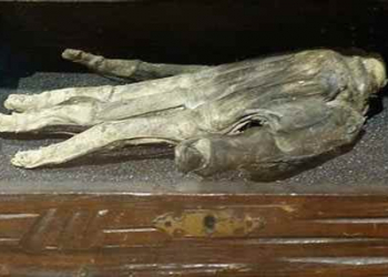 Mão da glória: A bizarra história de uma mão mumificada