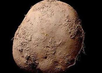 A foto de um milhão de euros: Uma batata