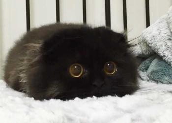 Conheça Gimo o gatinho com os maiores olhos que você já viu