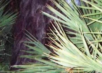Foto gump do dia: Skunk ape, O macaco fedido da Flórida