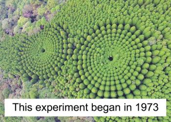 O mistério dos Incríveis círculos vegetais
