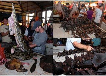 Fotos chocantes do mercado úmido da Indonésia