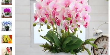 Tutorial: Como conseguir sementes gratuitas de flores