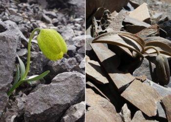 Conheça a planta que evoluiu para tentar sobreviver ao ser humano