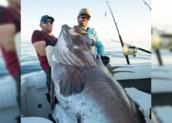 Não é história de pescador: Homem da Flórida captura uma garoupa gigantesca! Veja as fotos.