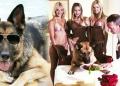 Milionários: Conheça o cachorro mais rico do mundo
