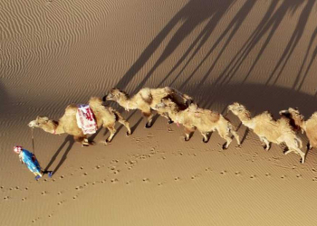 Foto gump do dia: Os camelos no deserto
