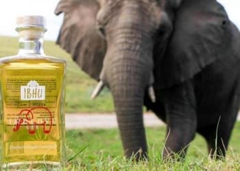 Dilíça: Conheça o Gin fabricado com fezes de elefante
