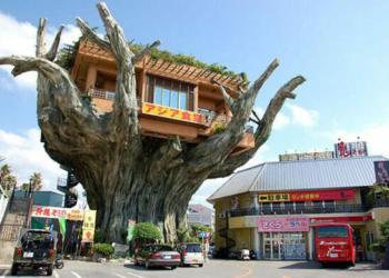 Jantar numa árvore?