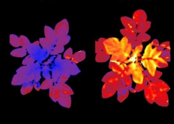 Foto Gump do dia: Plantas que brilham para falar
