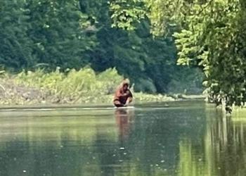 Morador de Michigan teria conseguido filmar o Pé grande atravessando um rio com seu filhote